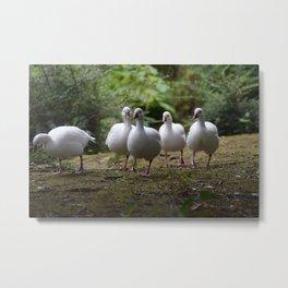 Gaggle of Geese Metal Print
