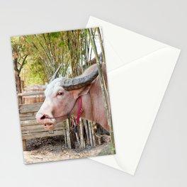 The albino buffalo Stationery Cards