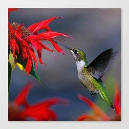 Hummingbird on a red flower Canvas Print
