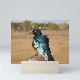 Colorful bird at a Kenyan National Reserve Mini Art Print