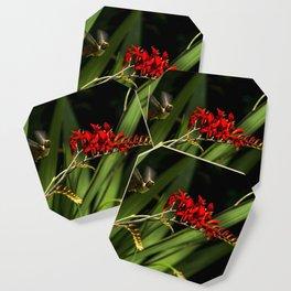 Rufous Hummingbird 2 Coaster