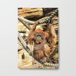 Orangutan. Metal Print