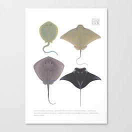 Western Australian Rays Canvas Print