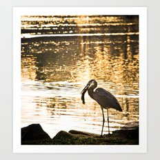 Great Blue Heron (Eats A Fish) Art Print