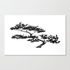 Bonzai Tree on White Background Canvas Print