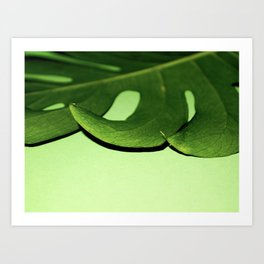Green with Envy Monstera Art Print