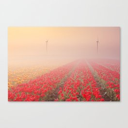 III - Sunrise and fog over rows of blooming tulips, The Netherlands Canvas Print