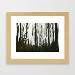 Coastal Forest Framed Art Print