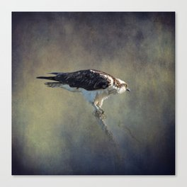 Osprey Raptor Canvas Print