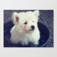 westie Canvas Prints featuring Westie by Courtney E Photography