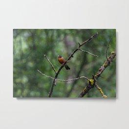 American Robin in Rain Metal Print