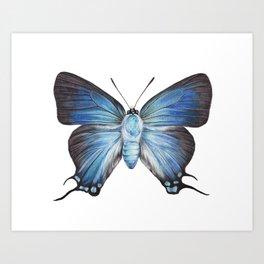 Butterfly - The Great Purple Hairstreak - ATLIDES HALESUS by Magda Opoka Art Print