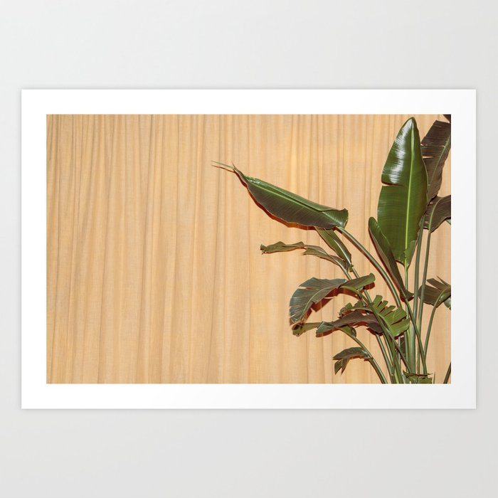 Curtain and Plant Art Print