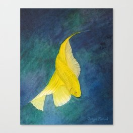 Yellow Betta Fish Swims In Blue Water Canvas Print