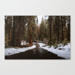 Tunnel Log Road in Sequoia Canvas Print