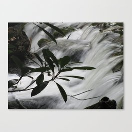 Cosby Stream Canvas Print