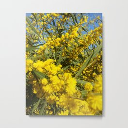 Mimosa 2 Metal Print