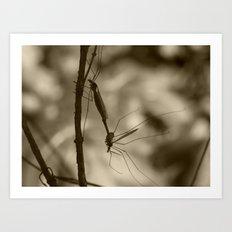 mayflies 2017 (bug porn) II Art Print