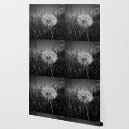 Make A Wish Wallpaper