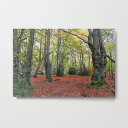 Walking Through Epping Forest Metal Print