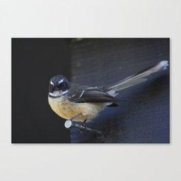 Fantail Canvas Print