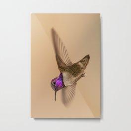 Male Costa's Hummingbird (Calypte costae) Metal Print