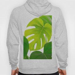 Beautiful Large Green Monstera Leaves On A White Background Fresh Mood #decor #society6 #buyart Hoody