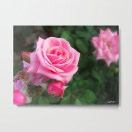 Pink Roses in Anzures 1 Metal Print