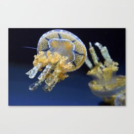 Jelly Fish Print Canvas Print