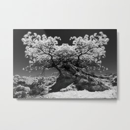 Conjoined Torrey Pines in Infrared Metal Print