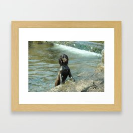 Puppy in the water  Framed Art Print