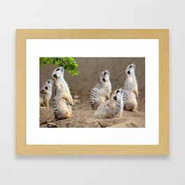 Meerkats - We're on the Lookout Framed Art Print