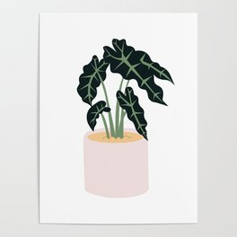 Elephent Ear Plant Poster