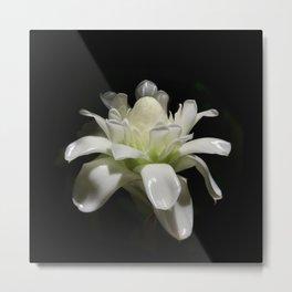 Bloom / white tropical flower Metal Print
