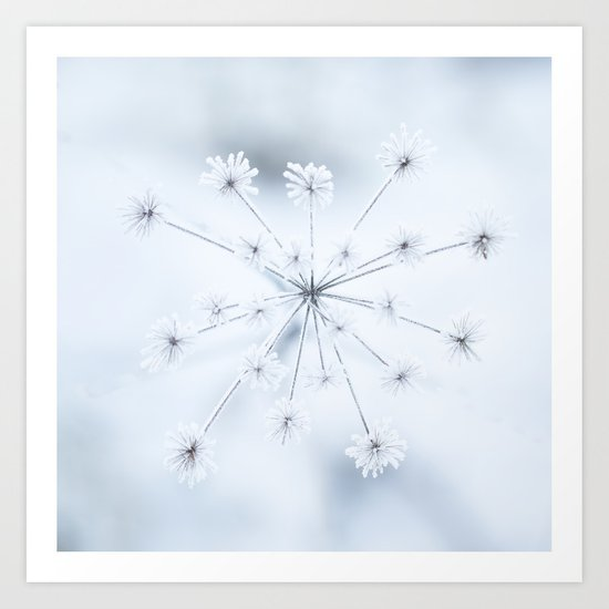 Beautiful Dry Flower with Ice Crystals Art Print