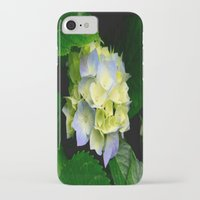 hydrangea iPhone & iPod Cases featuring Hydrangea  by Chris' Landscape Images & Designs