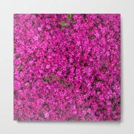 violet flowers Metal Print