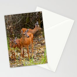 A Trio of Blacktail Deer in the Forest Stationery Cards