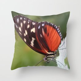 Disturbed Tigerwing Butterfly Throw Pillow