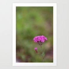 pink flowers Art Print
