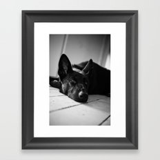 Dog German Shepherd  Framed Art Print