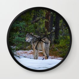 Wolf in Jasper National Park Wall Clock