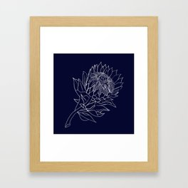 King Protea - Navy and white Framed Art Print