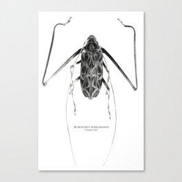 Acrocinus I Canvas Print