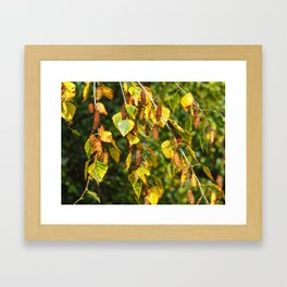 Autumn Leaves and Catkins Framed Art Print