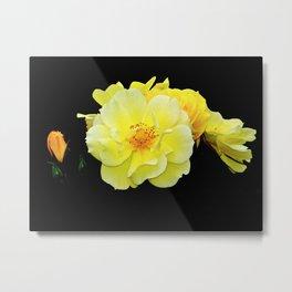 Yellow roses on black Metal Print