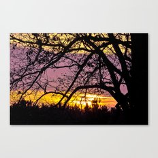 Branches Beholding Beauty Canvas Print