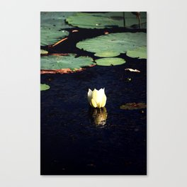 Lone lotus Canvas Print