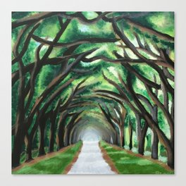 Spanish Moss Walkway Canvas Print