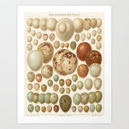 Antique Egg Lithograph Art Print